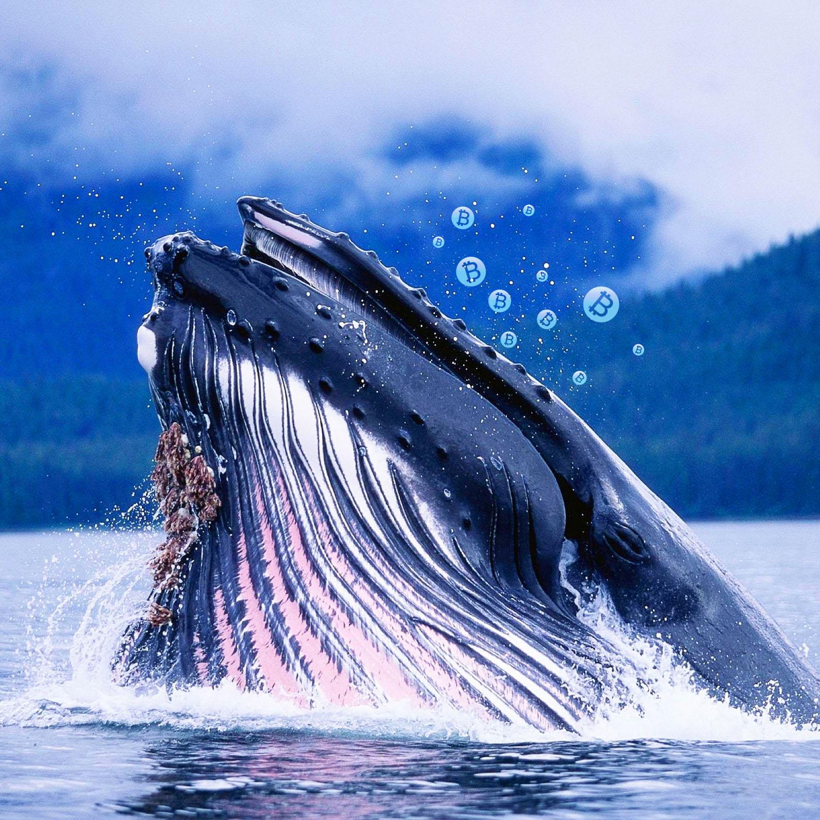 Ngưng đổ lỗi cho cá voi Bitcoin về biến động giá thị trường cryptocurrency