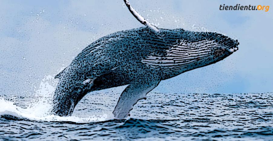 Lượng Ethereum cá voi tích trữ đã chạm ngưỡng kỷ lục trong lịch sử