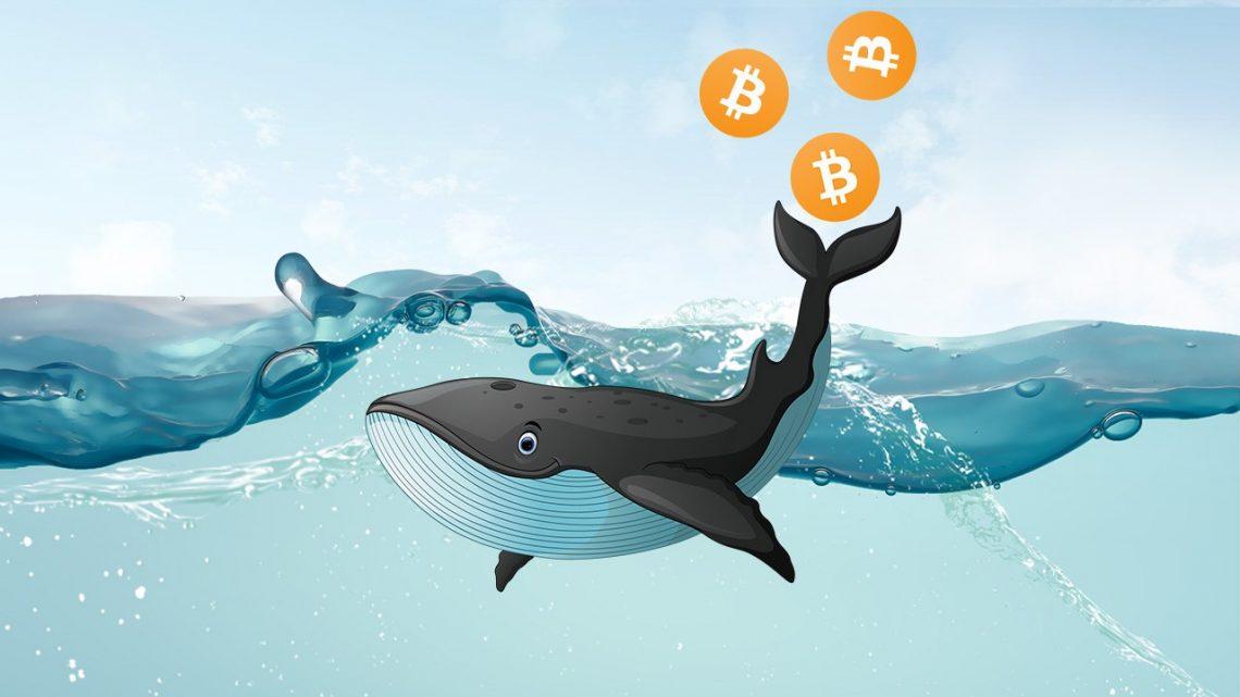 """Góc """"trinh sát"""": Thị trường bão tố, """"cá voi"""" crypto vùng vẫy như thế nào?"""