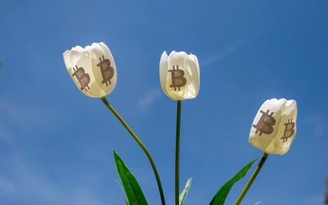 tiendientu.org-bong-bong-hoa-tulip-3