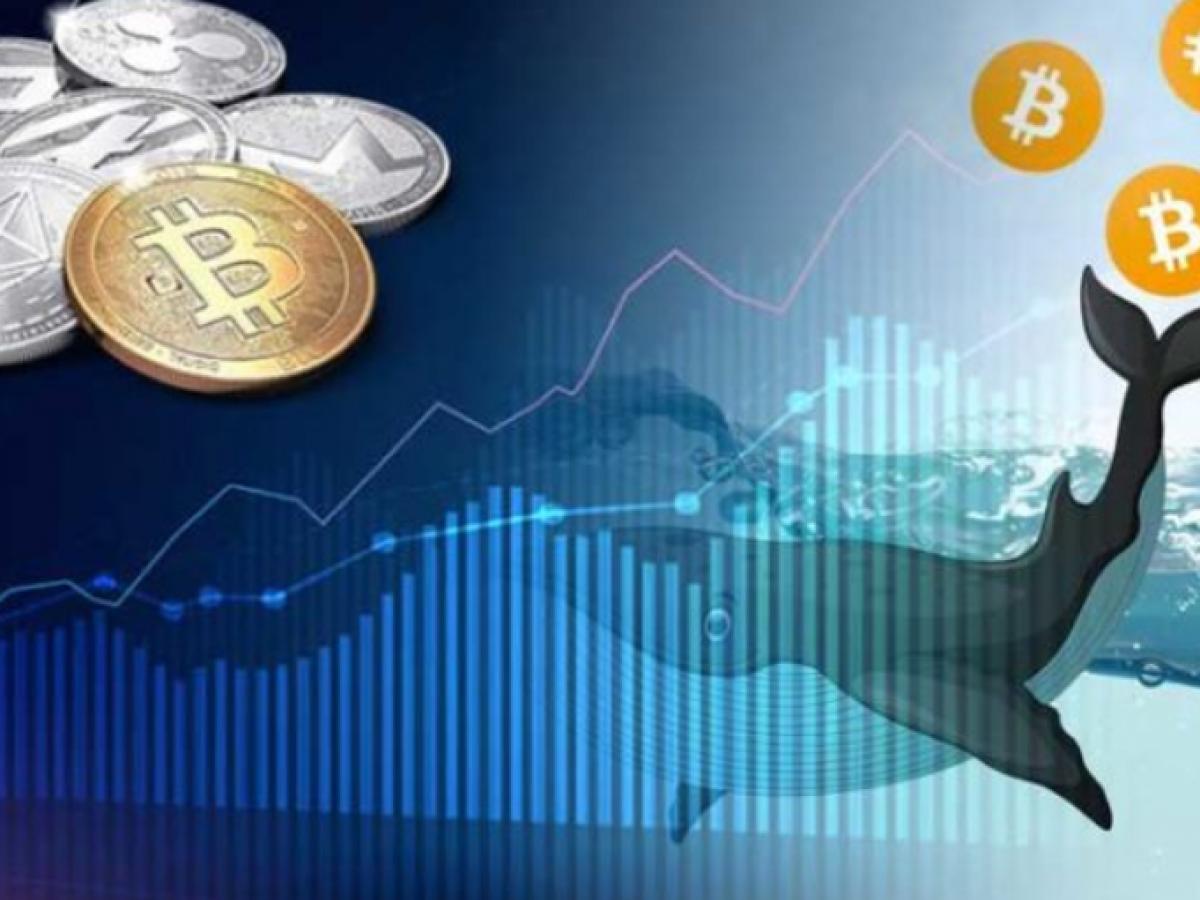 Cá voi Bitcoin là ai?